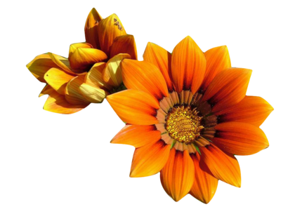 flowerpngmarysse_%284%29.png?type=w420